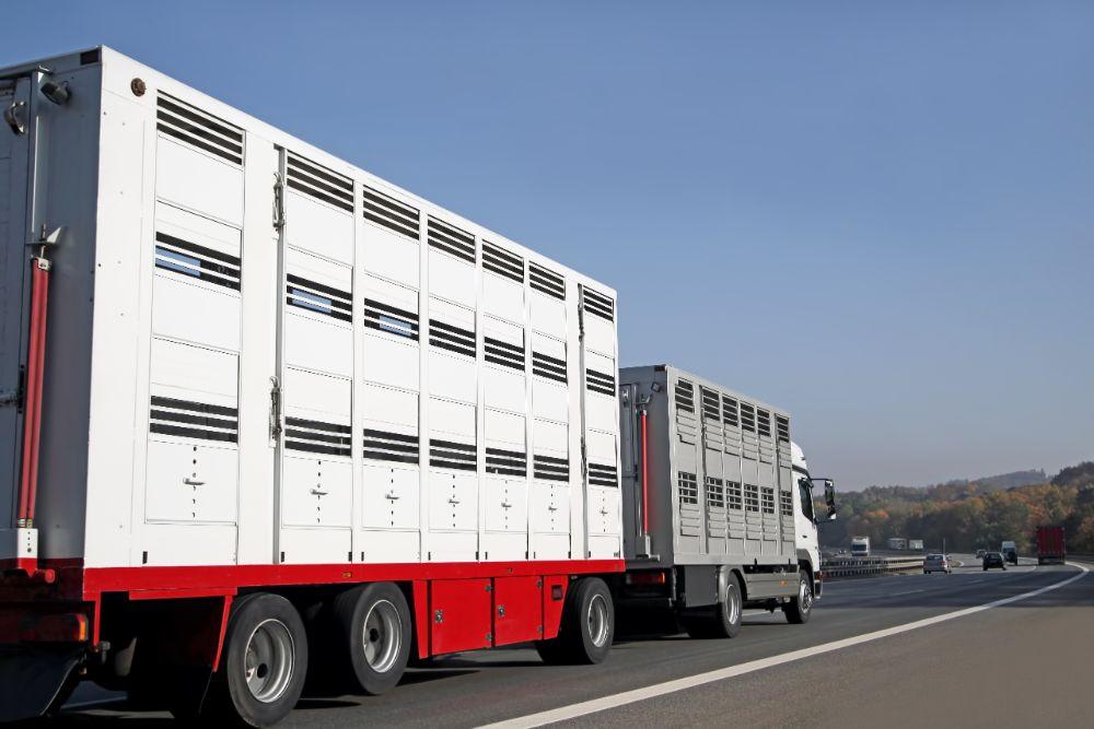 Preparing Your Trailer For Livestock Transportation